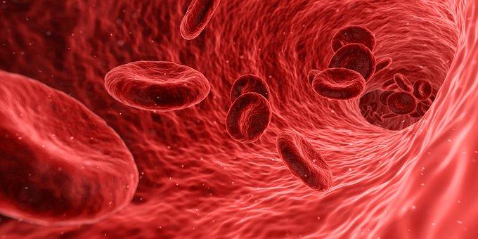 14. června: den slev na testy z krve
